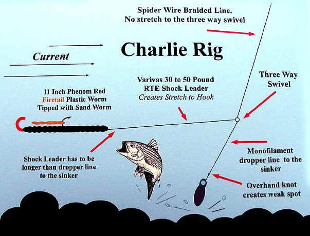 Charlie rig for Best catfish rig for bank fishing